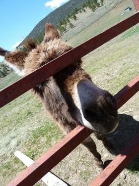 donkey fence animal