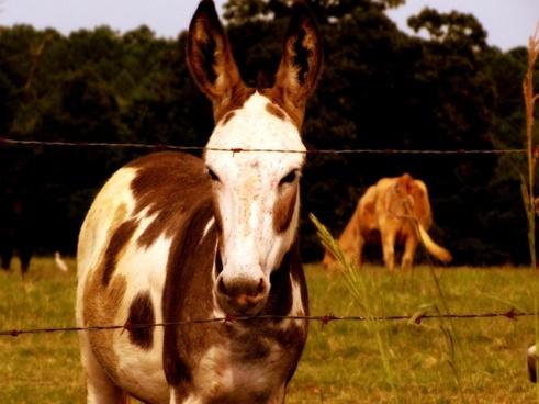donkey jackass farm