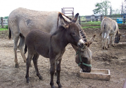 donkeys mare and baby