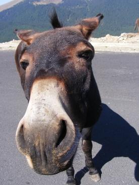 donkeys mountain road