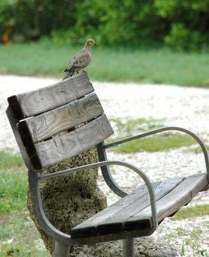 dove bird bench