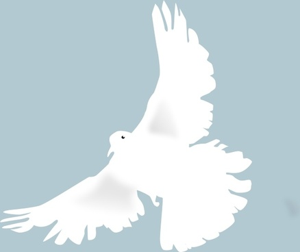 dove - colombe