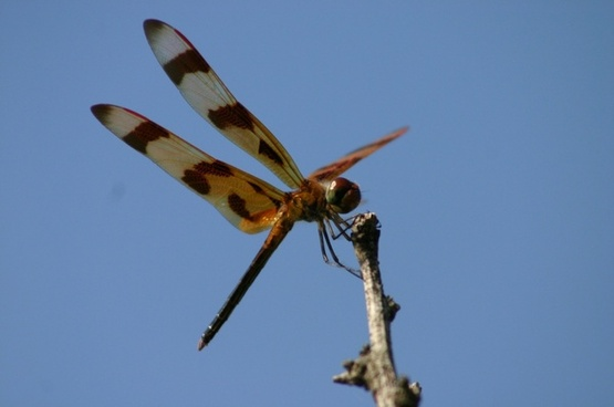 dragon fly insect