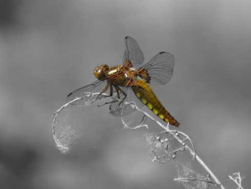 closeup of dragonfly on branch