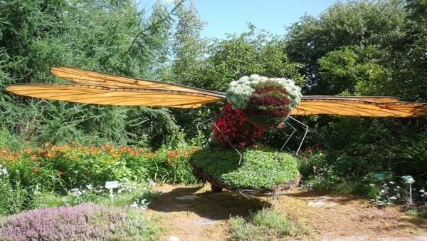 dragonfly garden plant