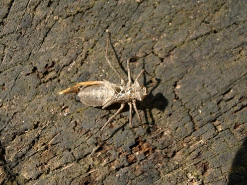 dragonfly larva larva hatched