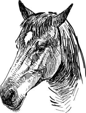 draw horses vector