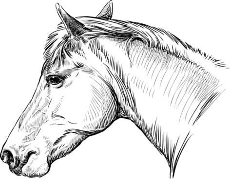 Horse Animals Drawing Free Vector Download 95 505 Free Vector For