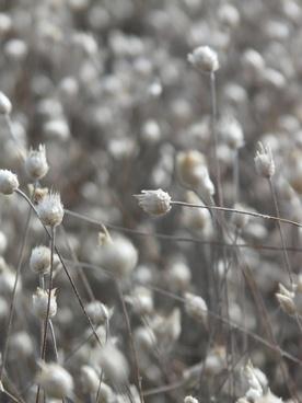 dried flowers white field