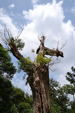 dried tree dead tree dying