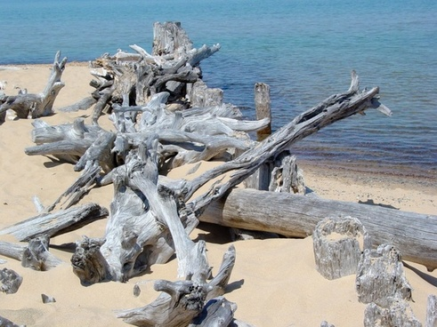 driftwood lake superior beach