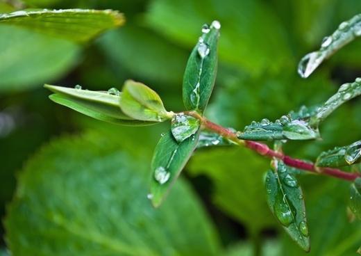 drop drops rain
