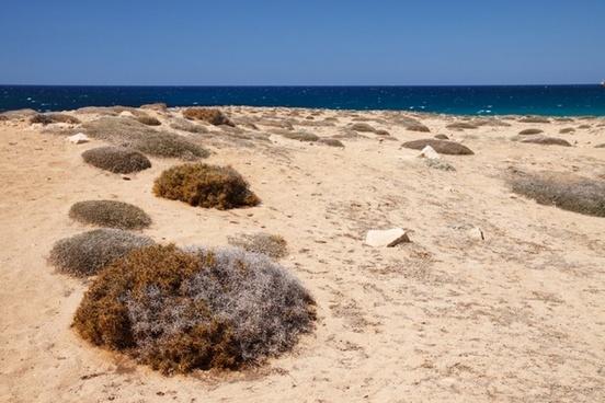 dry coast