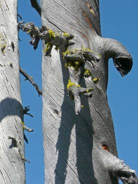 dry tree blue