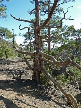dry tree volcano