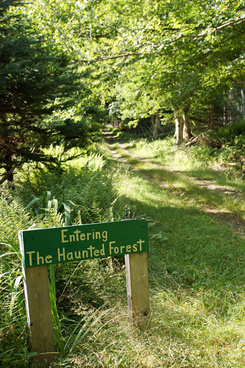 dsc01157 haunted forest