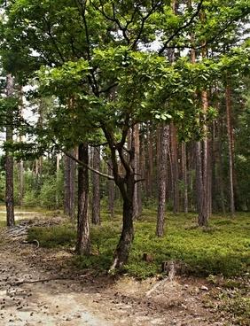 dub les trees
