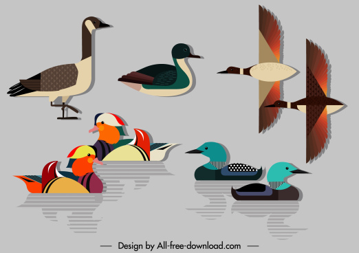 duck species icons colorful flat modern sketch
