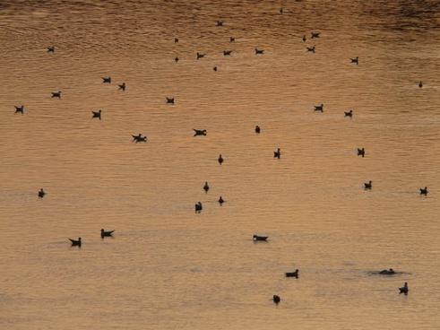 ducks river abendstimmung