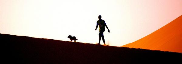 dune runner amp dog