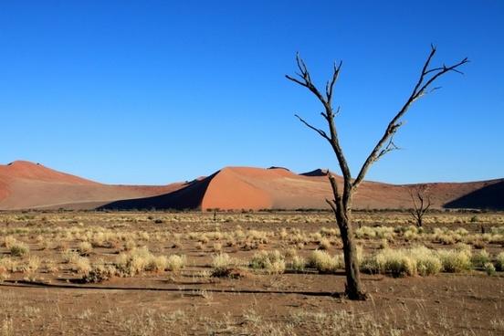 dunes steppe tree