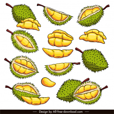 durian fruit icons colored classic handdrawn sketch
