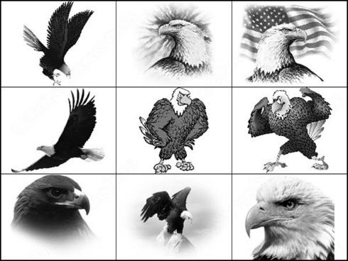 Eagle holding basketball photoshop brushes download (7