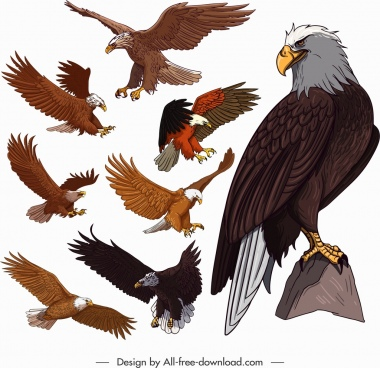 eagle icons colored cartoon sketch