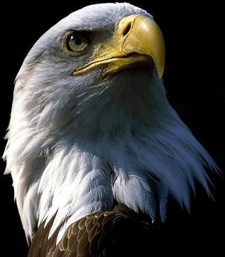 Eagle bird free stock photos download (2,738 Free stock photos) for ...