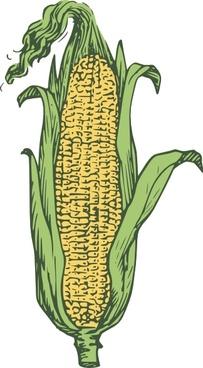 Ear Of Corn Colored clip art