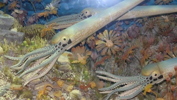 early giant nautilus like animals