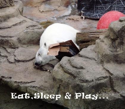 eat sleep amp play