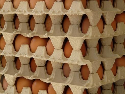 egg egg box food