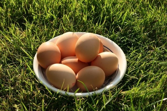 egg eggs food