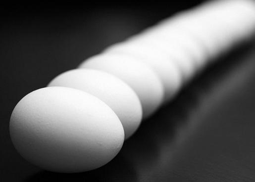 egg macro egg shell