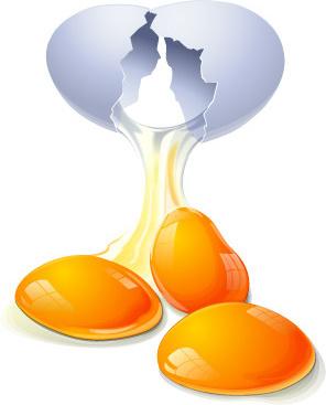 eggs vector food vector graphics