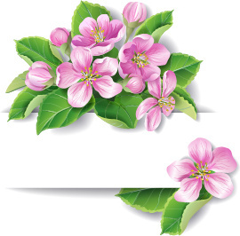 elegant pink flowers with paper background vector