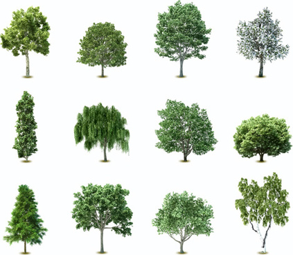 elements of various trees vector
