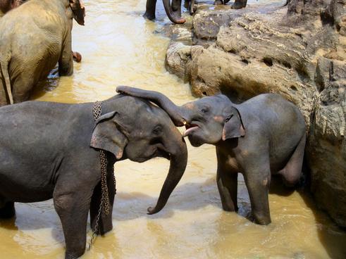elephant affection