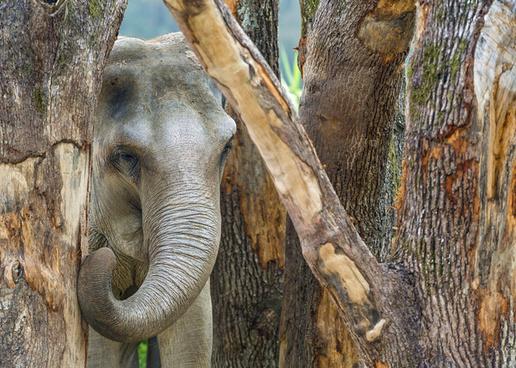 elephant and wood