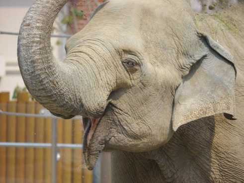 elephant animal joy