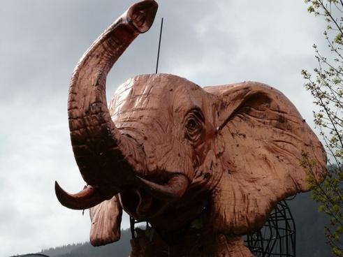 elephant pink proboscis