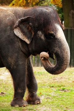 elephant with stick