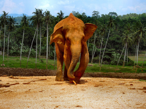 elephants of sri lanka 1