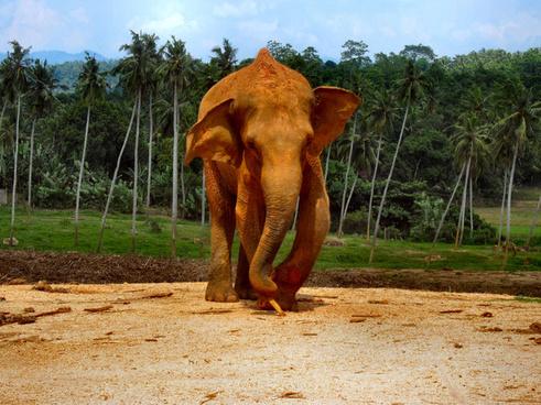 elephants of sri lanka 1