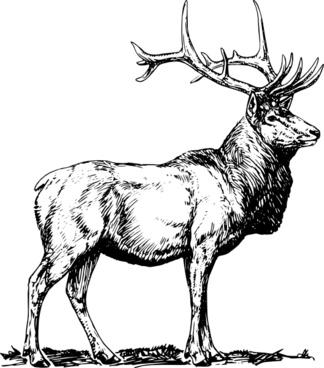 Elk clip art