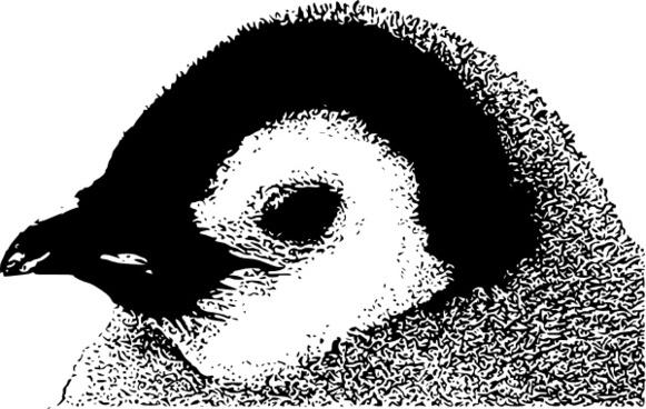 Emperor Penguin Chick Head clip art