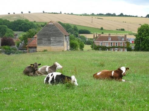 england united kingdom landscape