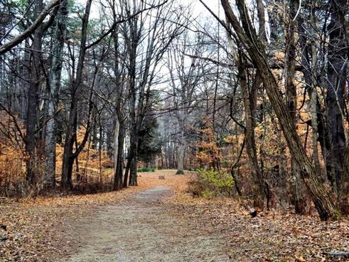 entrance to stepp cemetery