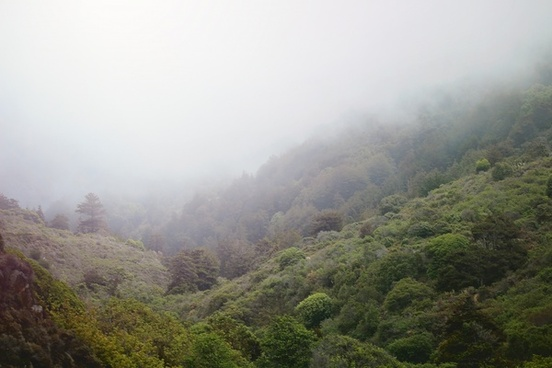 environment fog forest hill landscape lush mist